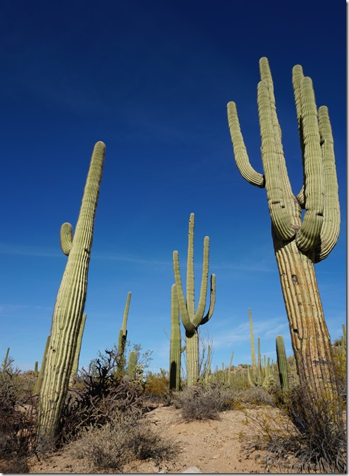Saguaro National Park in a day